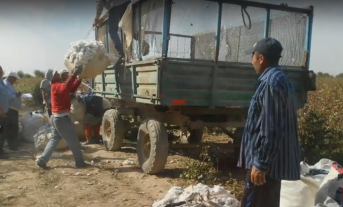 Video: Cotton pickers hired by the employees of public organizations