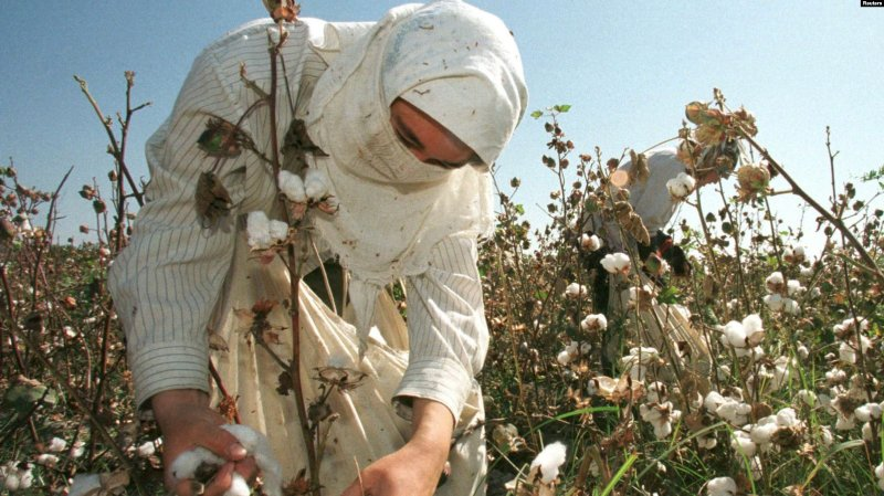 ILO Cites Dramatic Drop in Uzbek Use of Forced Labor