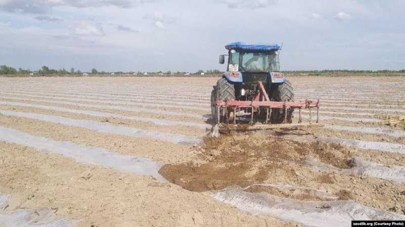 Uzbek Farmers Get 'Cluster' Bombed By Reforms