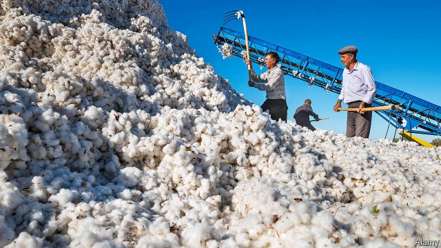 Uzbekistan tries to end the use of forced labour in the cotton fields