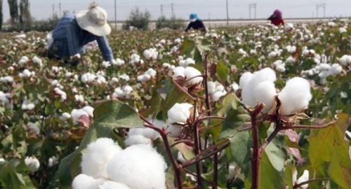 Uzbekistan: Efforts Underway to End Forced Labor