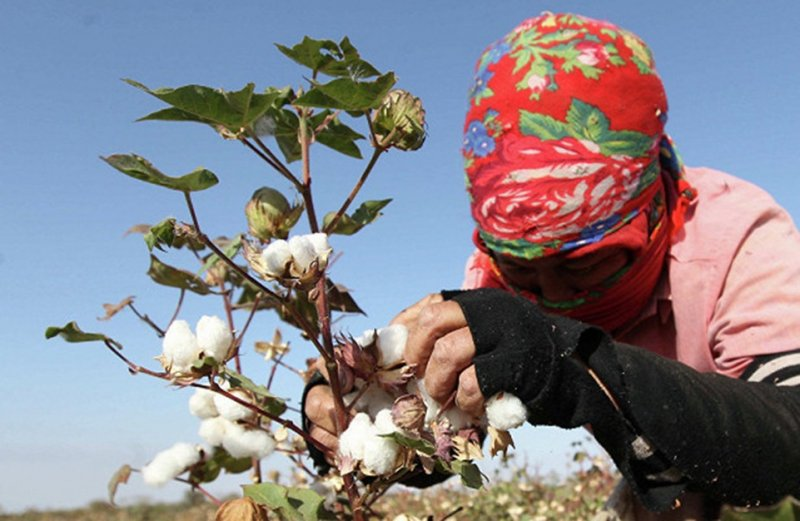 UGF Report: Despite Progress, Systemic Forced Labor Persists in Uzbekistan's 2018 Cotton Harvest  Cotton Campaign Urges Further Reform
