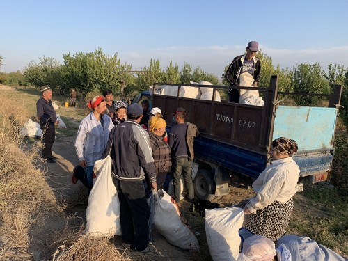 Teachers toil in cotton fields as Tajikistan tries to fix trade imbalance