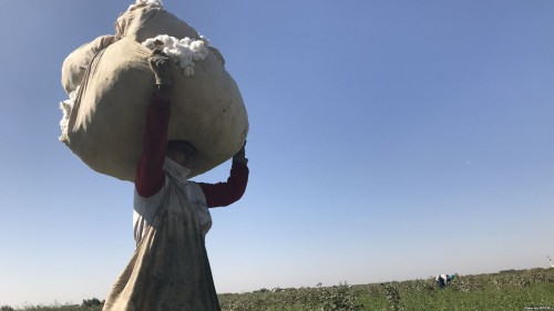 Campaigners challenge U.N. over forced labor in Uzbekistan's cotton industry